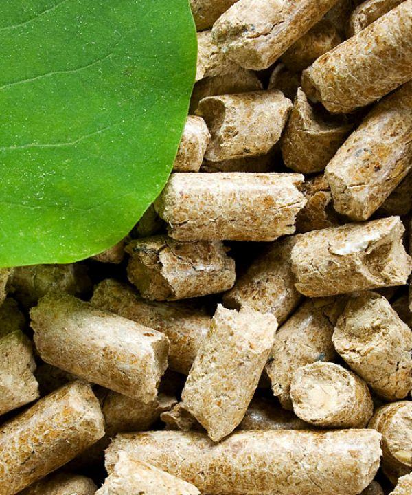 À propos de la biomasse